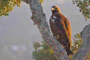 birdwatching in Catalonia