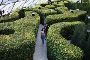 Hedge Maze in Jewel Canopy Park