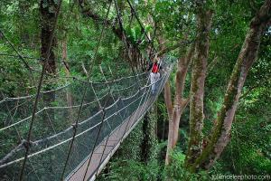 Borneo Excursions Tree Top Canopy Walkway