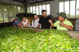tea factory tour