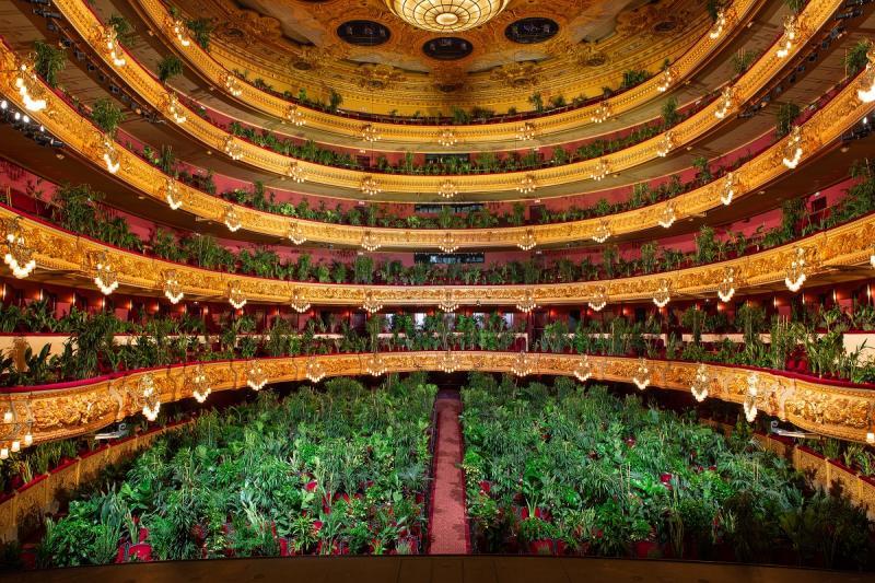 Plants Concert